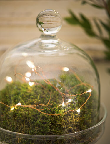 *Fairy Light String, 5 ft.