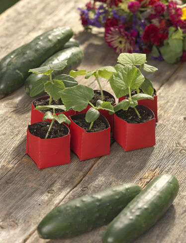 "Peel Away™ 2"" Seedling Pots, Set of 6"