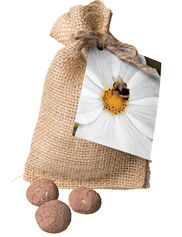 Bee & Pollinator Seed Balls