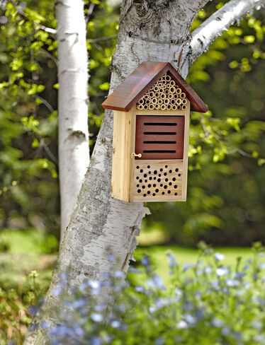 Beneficial Bug House