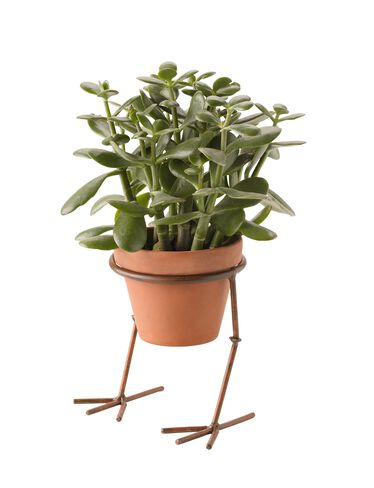 Chicken Feet Plant Stand