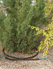 Landscape Snip-n-Drip Soaker System
