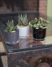 Classic Glass Mini Succulents, Set of 3