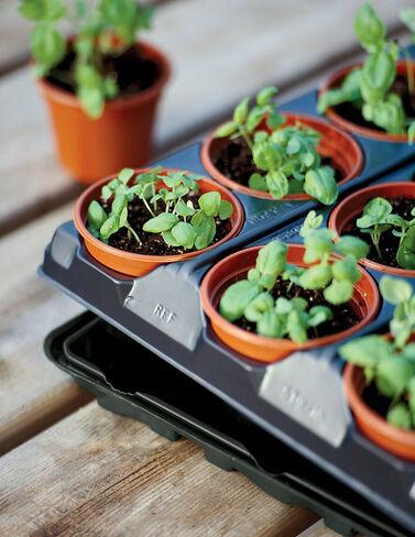 """3"""" Self-Watering Transplant Pots, Set of 18 Seed Starting, Seedling, Seedstarting Supplies, Gardening, Seed-Starting, Garden"""