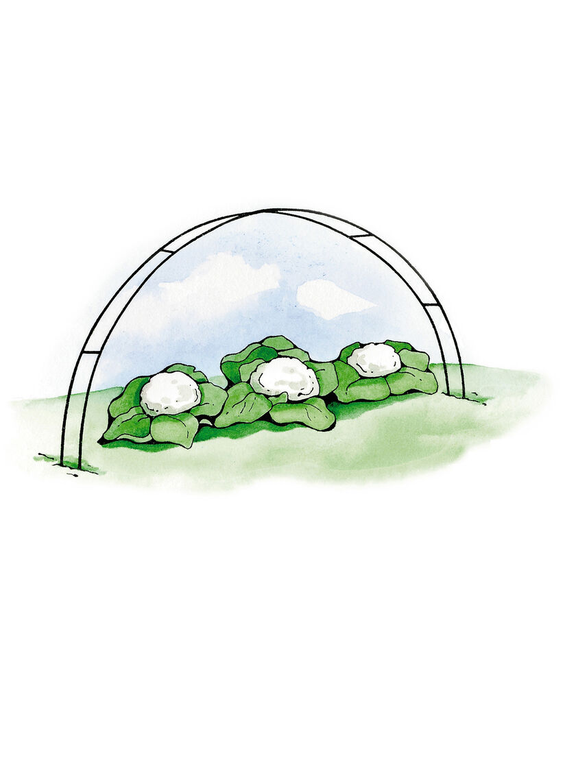 Super Hoops for Floating Garden Row Covers and Frost Gardenerscom