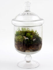 Sweet Dreams Terrarium