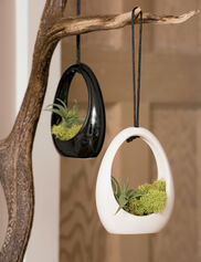 Hanging Air Plant Pendant