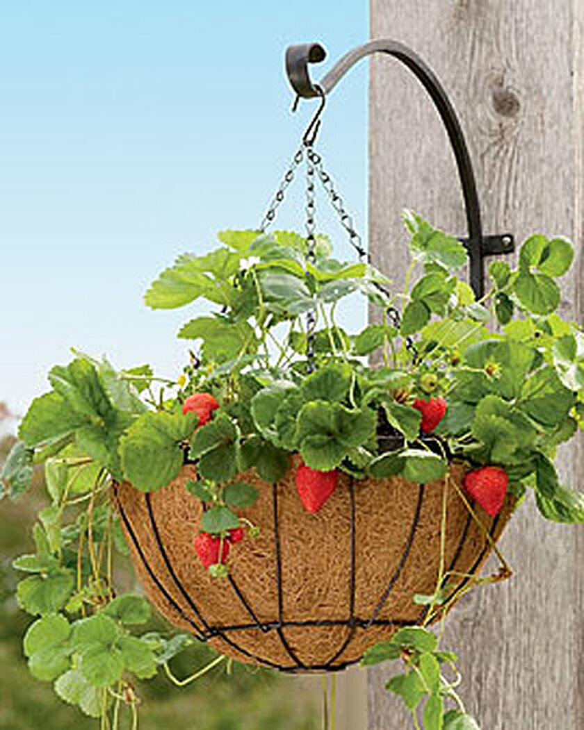 Strawberry success kit hanging planter buy from gardener for Gardeners supply planters