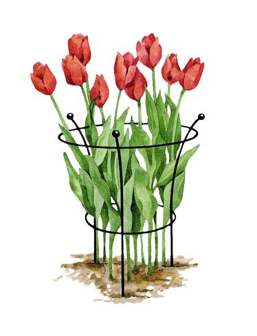 Essex Tulip Supports, Set of 2
