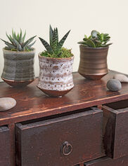 Glazed Ceramic Mini Succulents, Set of 3