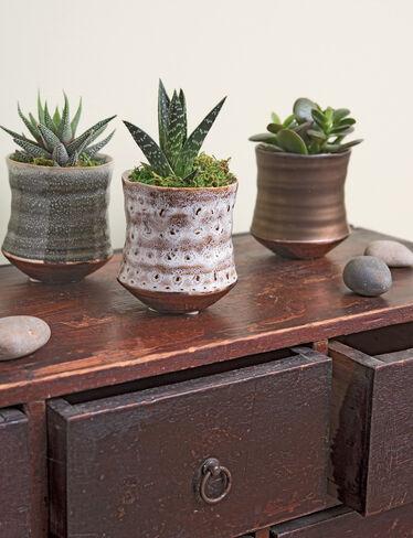 Glazed Ceramic Mini Succulents, Set of 3