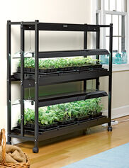 *Soil, seedlings and starter trays not included.