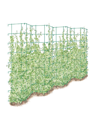 Tall Expandable Pea Trellis