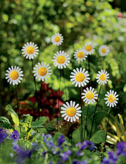 Daisy Bouquet Stakes, Set of 13