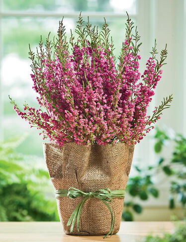 Heather Plant Buy From Gardener S Supply