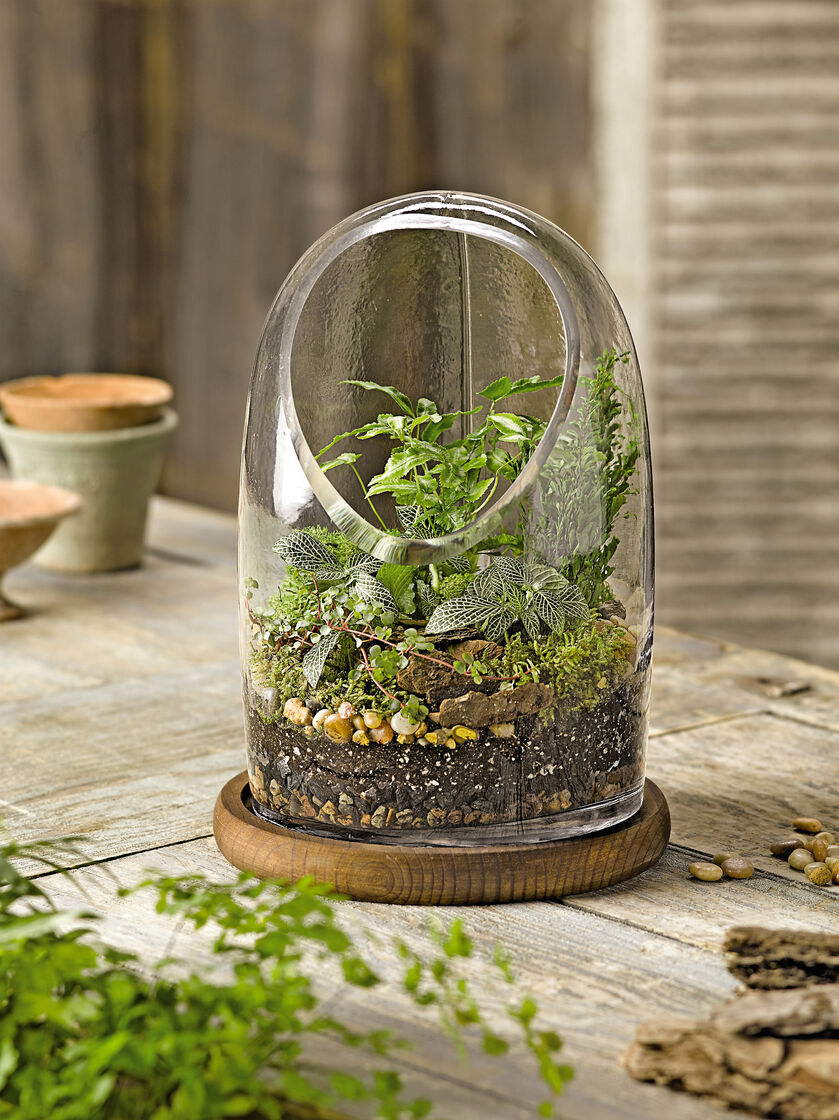 oval top glass terrarium gardener 39 s supply. Black Bedroom Furniture Sets. Home Design Ideas