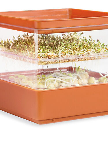Sprout Growing Kit
