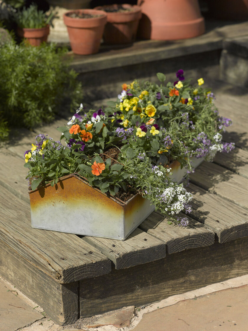 Galvanized planter rustic chicken feeder planter for Gardeners supply planters