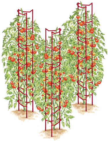 Red Tomato Ladders, Set of 3