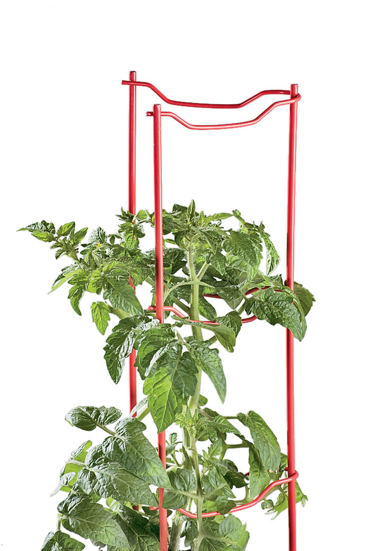 Tomato stakes tomato cages tomato ladders gardeners supply for Gardeners supply burlington