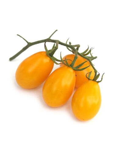 Golden Sweet Pear Tomato Plant