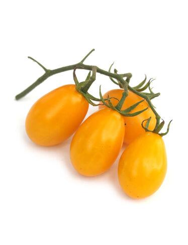 Golden Sweet Pear Tomato Plant