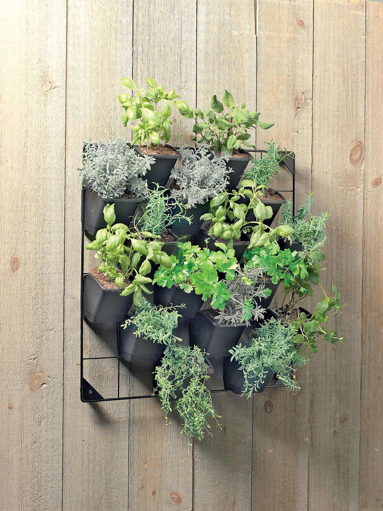 Hanging baskets for plants and flowers self watering for Wall plants outdoor