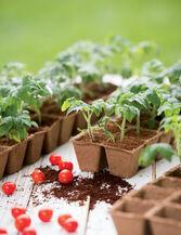 "2"" Square Biodegradable Pots, Set of 54"