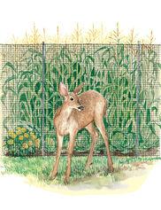 Deer Fences
