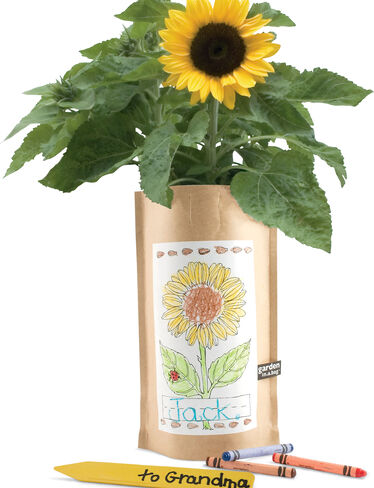 Sunflower Garden in a Bag Kids' Kit