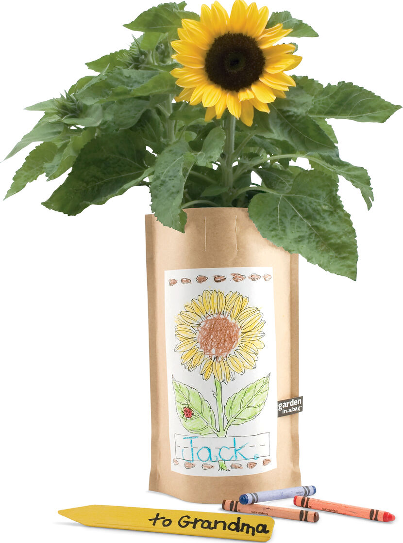 Sunflower Kit Garden in a Bag Kids Gardening Kits