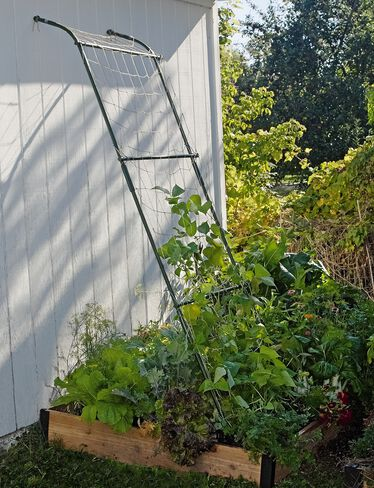 Lean-To Trellis