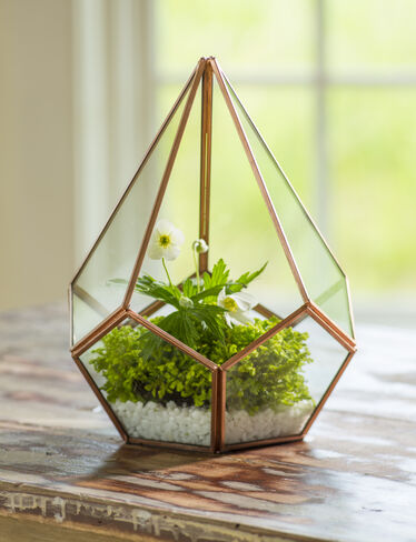 Teardrop Tabletop Terrarium