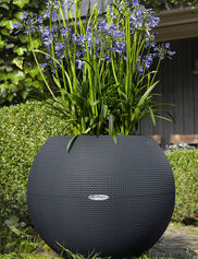 Puro 50 Self-Watering Sphere Planter
