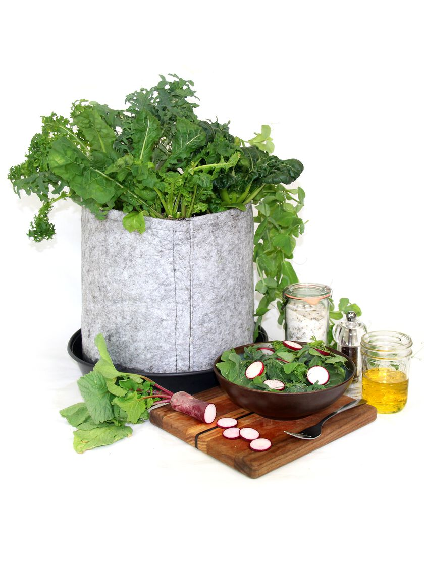 Herb Kitchen Garden Kit Grow Your Own Salad Container Garden Kit Gardenerscom