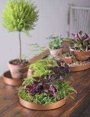 Round Plant Tray