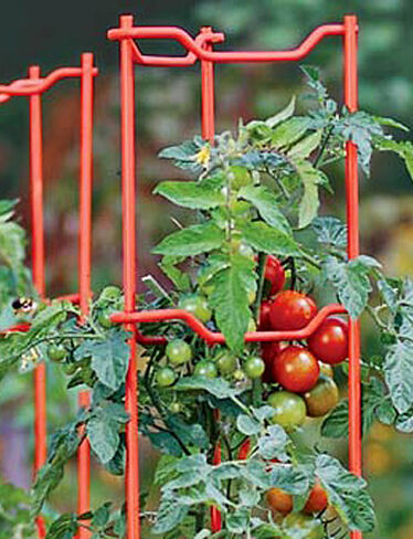 Red Tomato Ladders, Set of 5