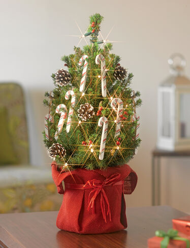 Candy Cane Tabletop Spruce Tree