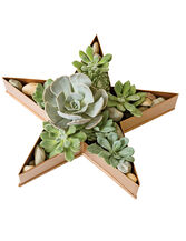 Star Dish Planter
