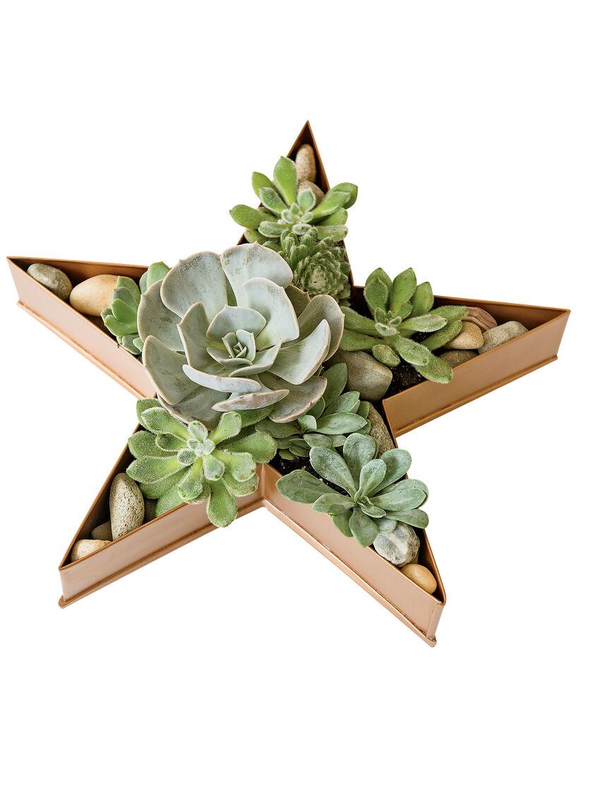 Shallow Planter Metal Star Dish Planter Gardeners Com