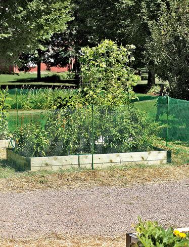 Pest Fence
