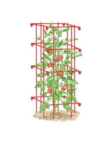 Tomato Cage, Single