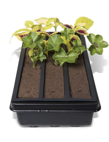 Snip & Grow Cutting Tray