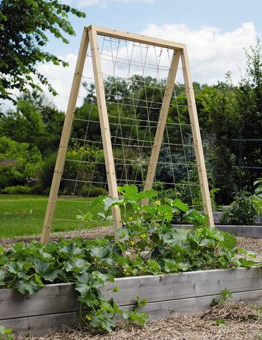 Twine Vegetable Trellis Bean Seeds, Pole Beans, Bean - Pole, Vegetable Seeds, Garden Seeds, Seeds, Garden Supplies