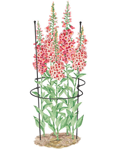 Essex Z-Ring Flower Supports, Set of 2 plant supports, garden trellis, garden supplies, organic garden supplies, vegetable garden supplies