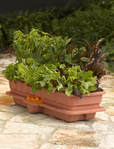 Flower & Vegetable Waterer