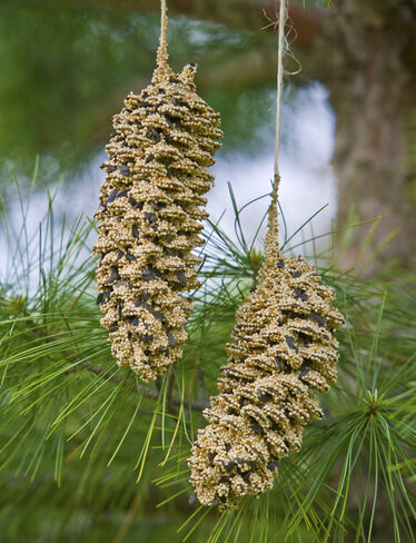 Birdseed Pinecone Pair