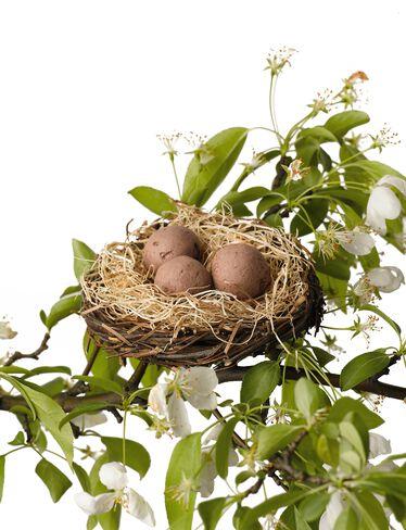 Flowering Seed Nest