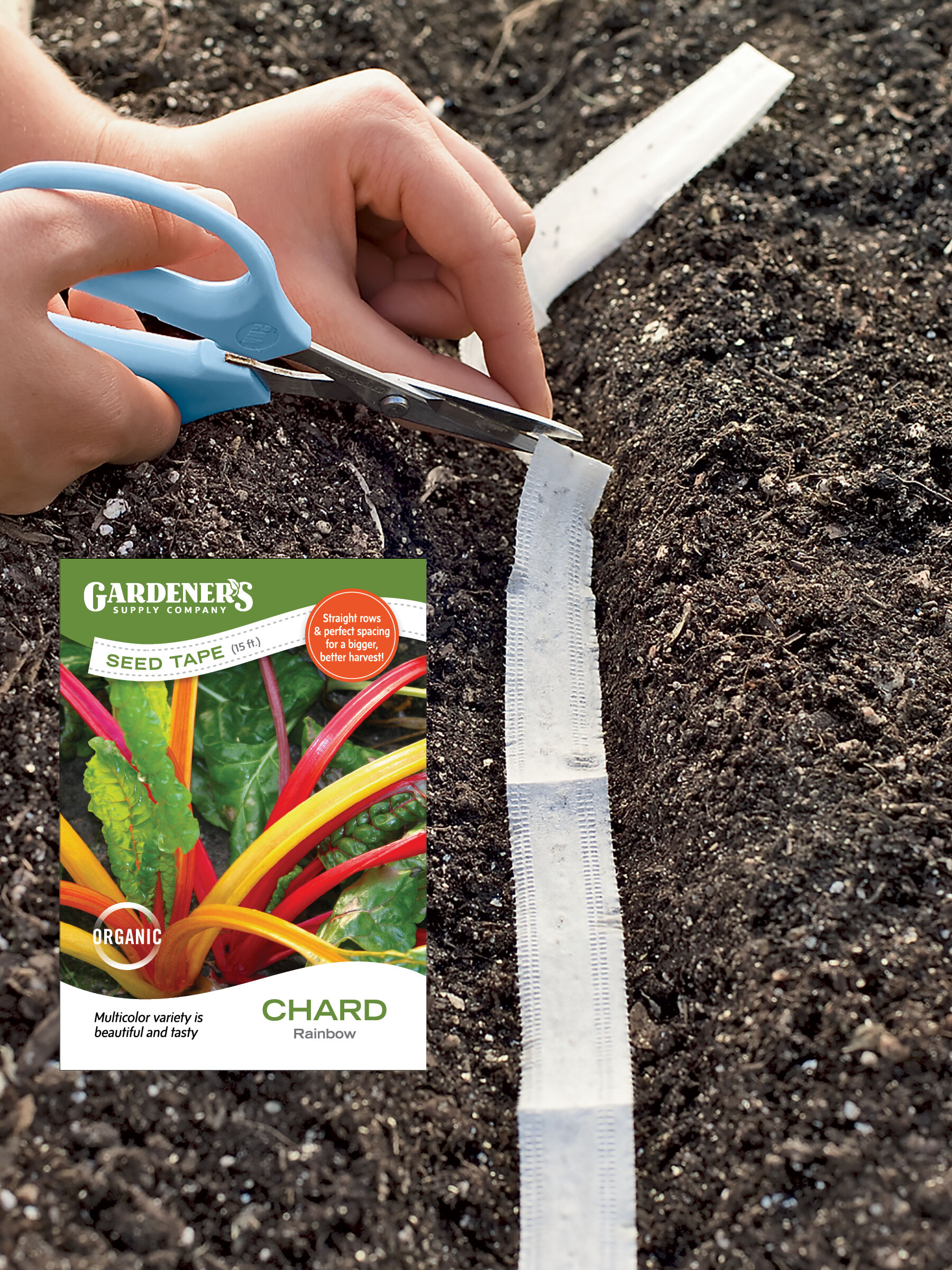 Rainbow Swiss Chard (Mixed Colors) - 15 Foot Seed Tape, Chard Seed, Swiss Chard Seed, Spinach Beet Seed, Bright Lights Chard, Garden Seeds, Vegetable Seeds
