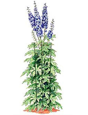 Tall Plant Supports, Set of 3